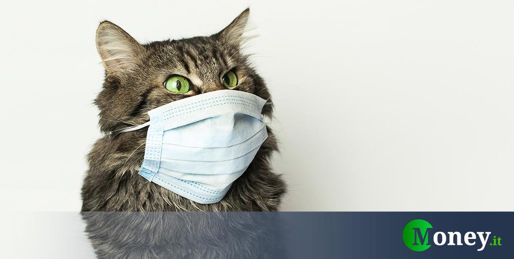 Gatto positivo al coronavirus: primo caso di contagio in Belgio