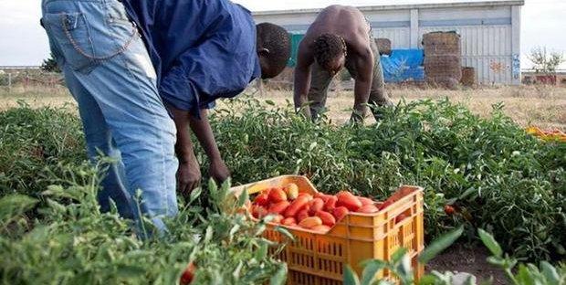 Il lavoro in nero per stranieri è reato: sanzioni penali e ...