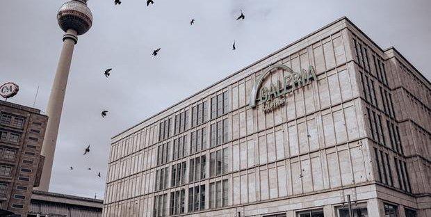 Improvvisa moria di uccelli in Germania, strage di cinciarelle