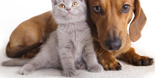 Vendere Cuccioli Di Razza Senza Pedigree è Illegale Le Sanzioni