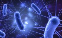 Escherichia coli al mare: sintomi, cause, quanto dura e trattamento