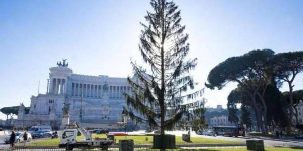Albero Di Natale Roma.Da Spelacchio A Spezzacchio Quanto E Costato L Albero Di Natale Al Comune Di Roma